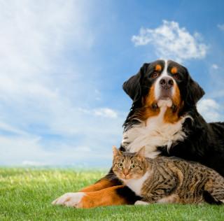 Risks for Pets