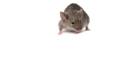 Rodenticide_Hazards_edited_Final2