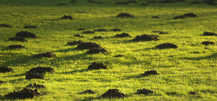 Are Gophers or Moles Ruining Your Yard?